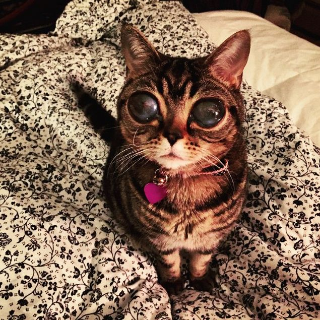 alien cat with incredibly big eyes