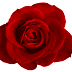 Roje,Rose Images beautiful image