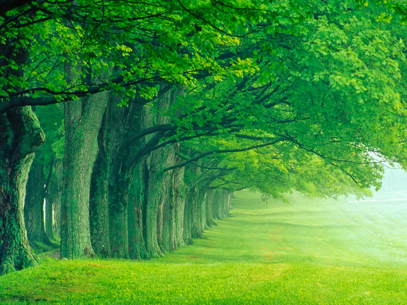 green trees wood forest peace calm