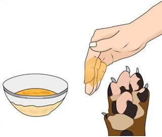 remedios caseros curcuma para lamido de patas en perros