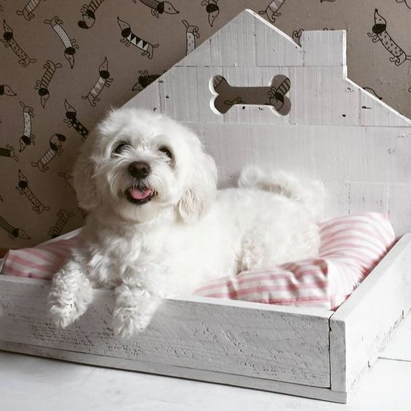 Cute Beds For Pets Combine With Interior Decoration Ideas 6