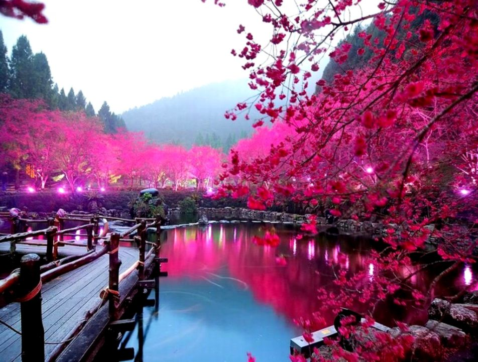 Cherry Blossom Lake Sakura Japan Wallpaper Wallpapers Sensei