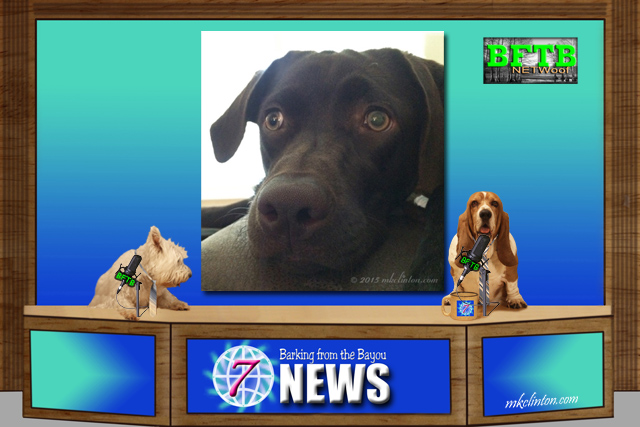BFTB NETWoof News with two dog news anchors