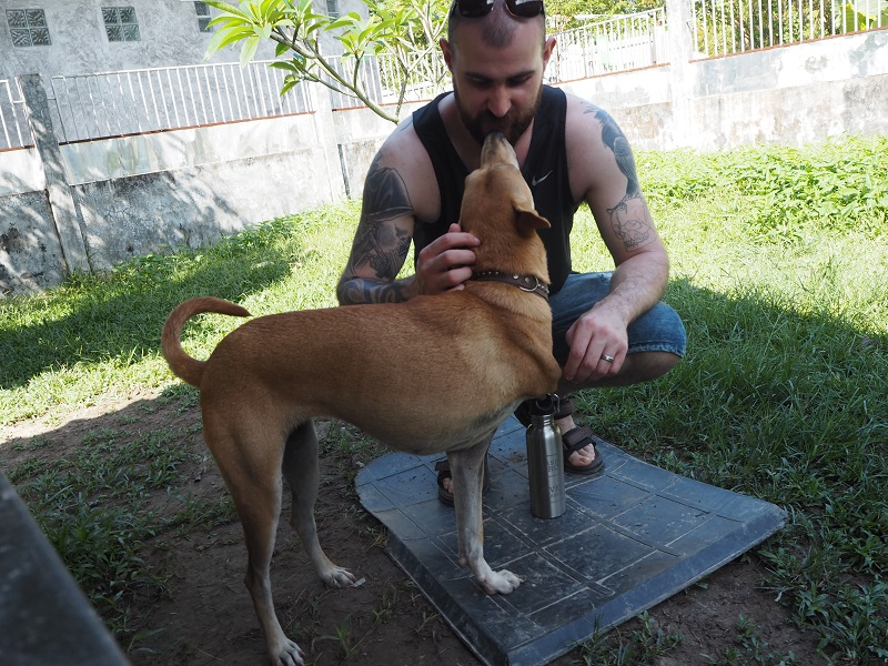 Meeting Deng Mia, three legged dog at Lanta Animal Welfare