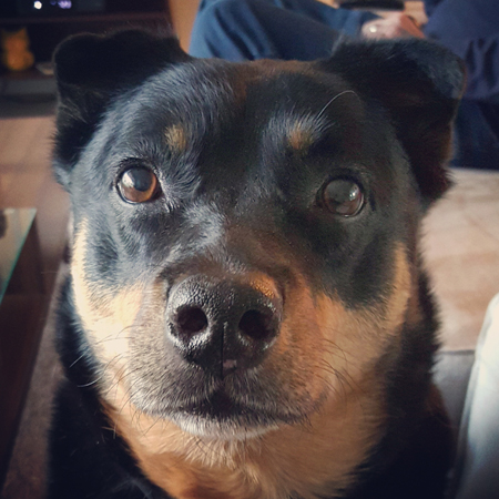 image of Zelly the Black and Tan Mutt, looking at me with big, brown, plaintive eyes