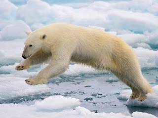 Charity Navigator Celebrates International Polar Bear Day