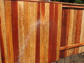 Rinsing the fence with water sprayed from garden hose.