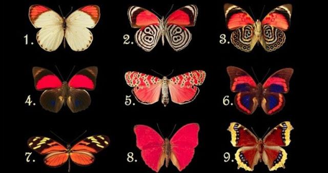 Η Πεταλούδα Που Θα Διαλέξεις