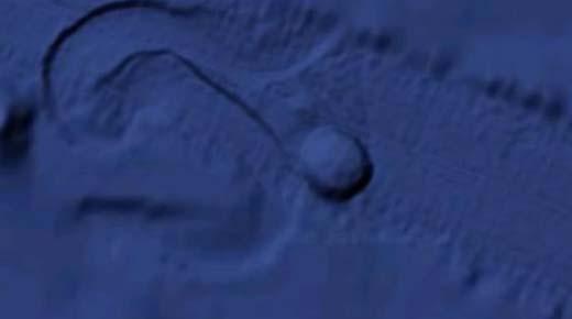 Masivo objeto circular parece moverse en el fondo del Oceano Pacífico