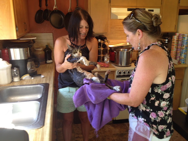 Mom & her Best Friend got drunk and gave the cat a Bath. (Zoom into cat's Face) When You See It