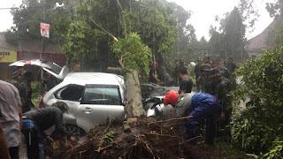 Banyak Pepohonan Tumbang, Angin Puting Beliung di Kota Bogor