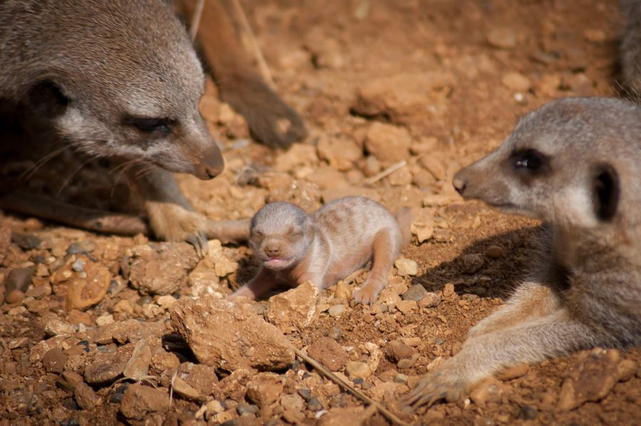 2. Furry little Newborn by Adam Jones