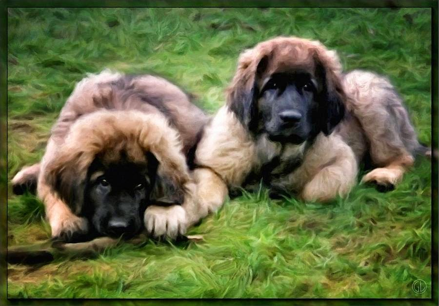 Rules of the Jungle: Leonberger puppies |Leonberger Dogs And Puppies