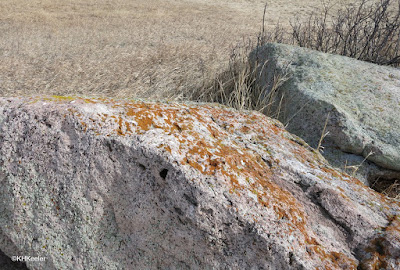 Rock with rust-colored lichens