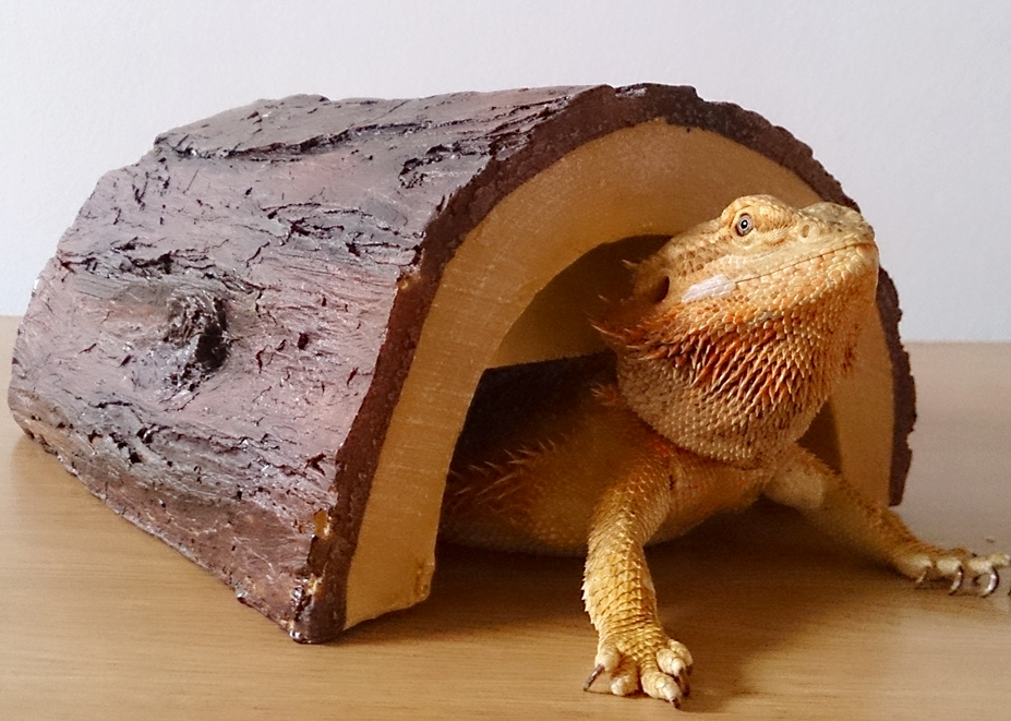 Bearded Dragon Care: Bearded Dragon Health and Disease Page 3
