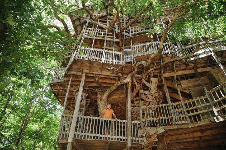 les girafes vivre dans un arbre. Black Bedroom Furniture Sets. Home Design Ideas