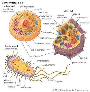 Perbadingan sel bakteri, hewan, dan tumbuhan