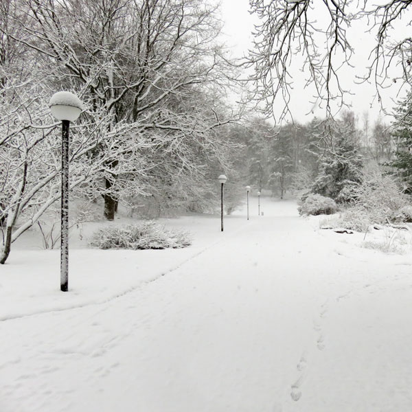 Winter, Moments, Stille, Park, Wege
