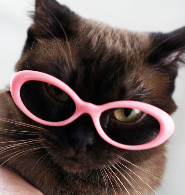 The latest in kitten eyeware. by shadow planet from flickr (CC-NC-ND)