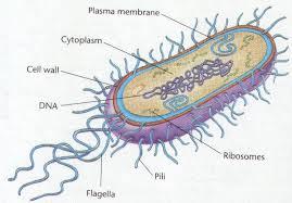 Ciri-Ciri, Bentuk dan Klasifikasi Archaebacteria