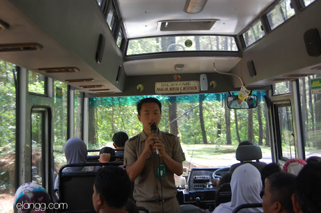 taman safari indonesia prigen