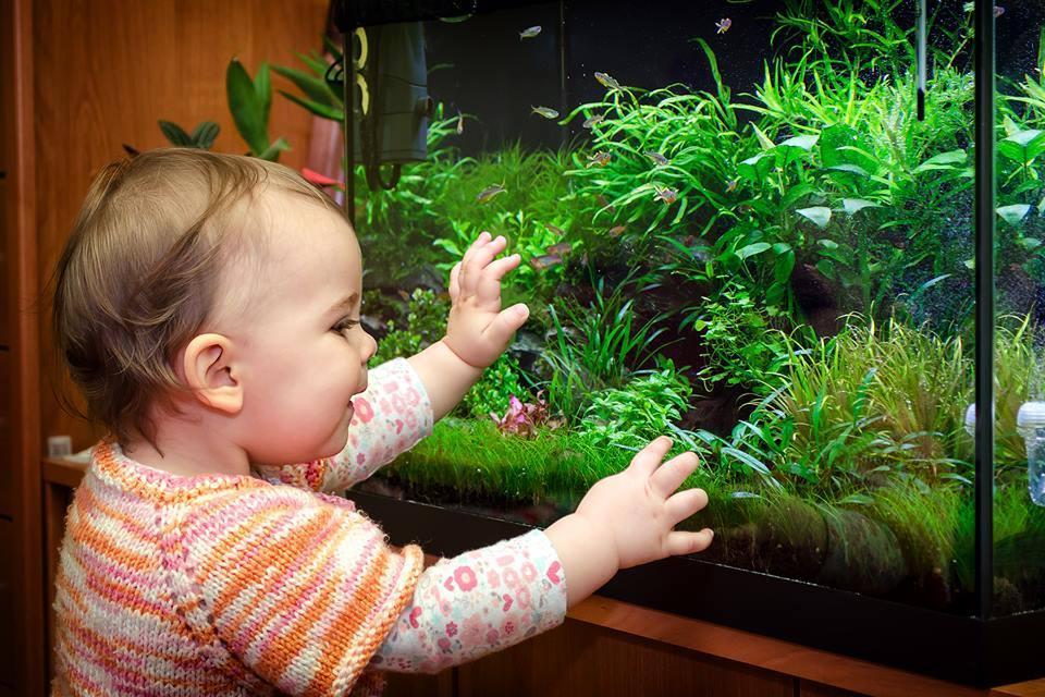 các em bé chắc chắn khó rời mắt khỏi những bể thủy sinh đẹp