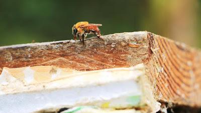 image 4 copia 15 - En Oaxaca exportan 500 toneladas de miel a Alemania - El Apicultor Español: Actitud y Aptitud Apícola