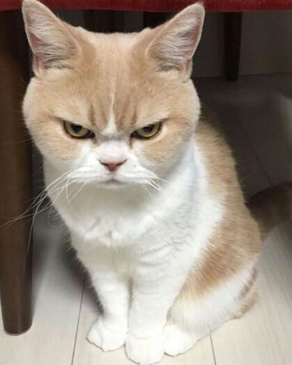 Gambar Marah Lucu : gambar, marah, Kucing, Comel, Marah, 81021+, Untuk, Comel,