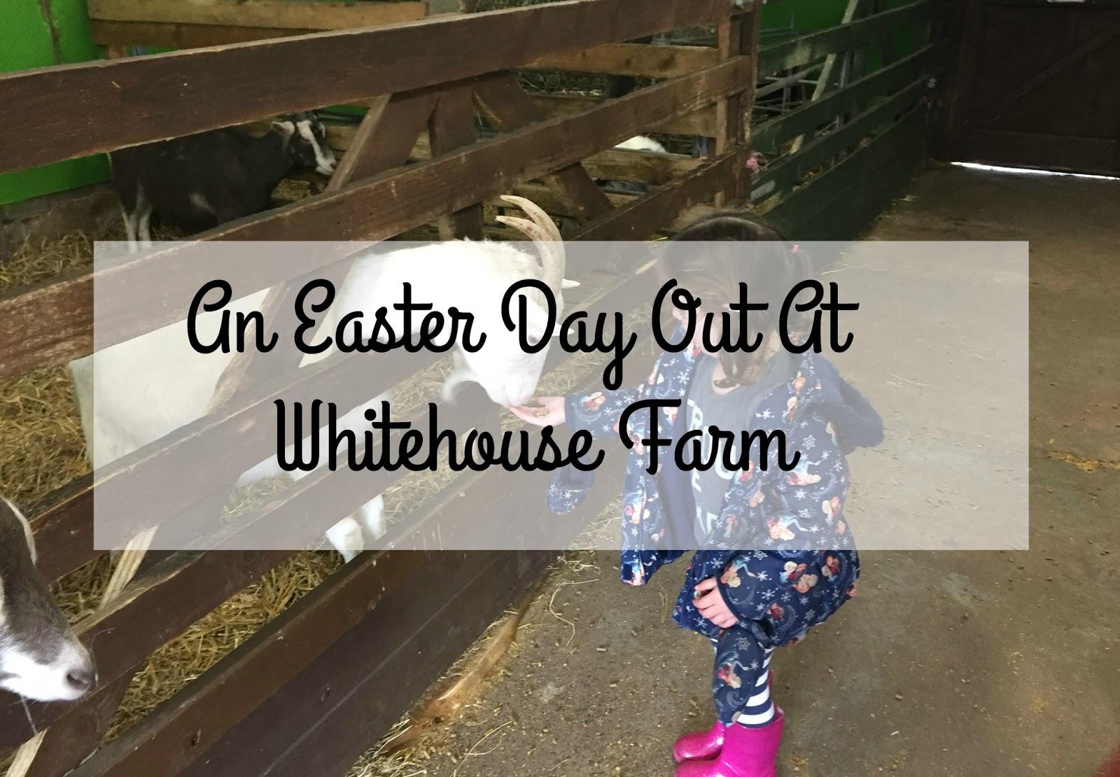 Easter Visit To Whitehouse Farm Morpeth