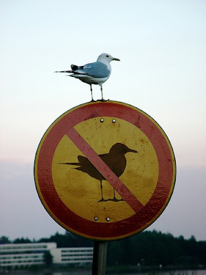 A gull standing on a sign indicating No Gulls