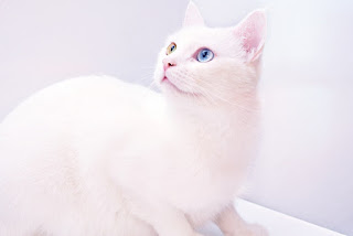 10 Most Beautiful Cats In The World