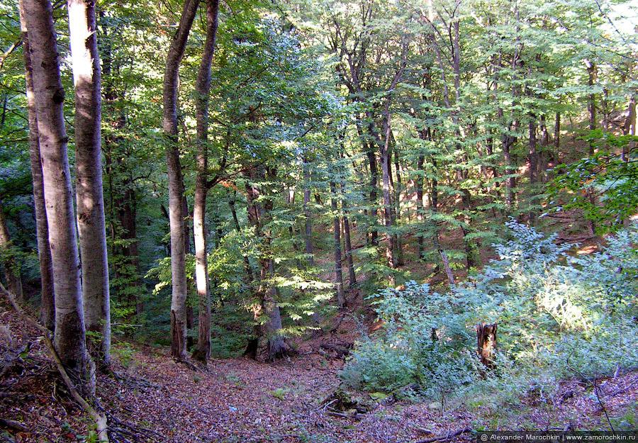 Лесной массиво на склоне горы Бештау