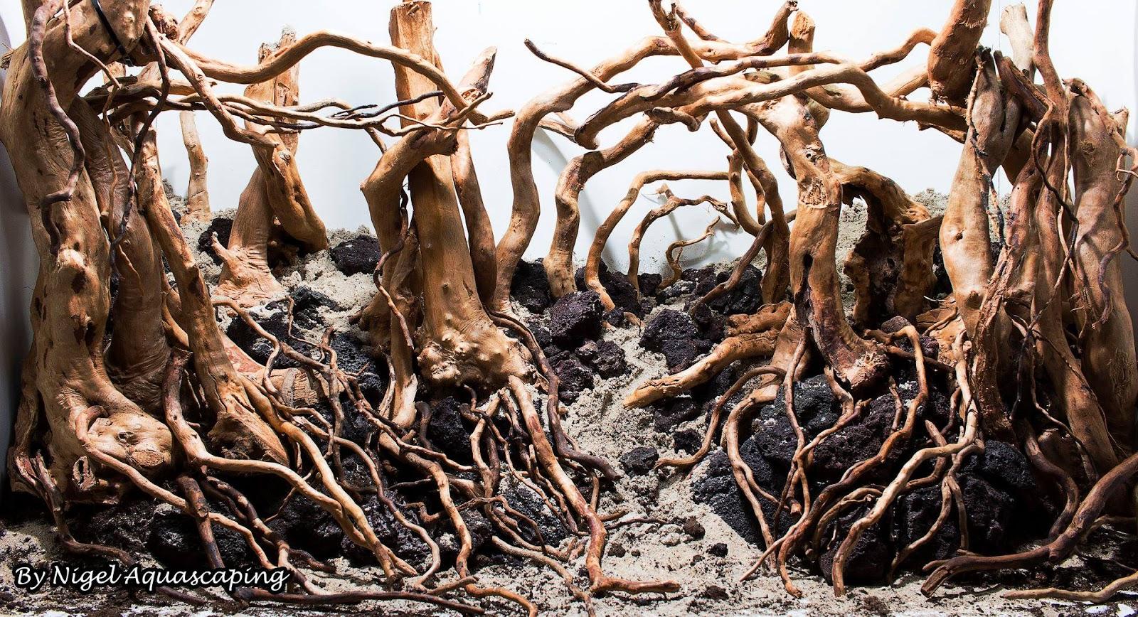 Lũa đỗ quyên trong một hồ thủy sinh bố cục rừng