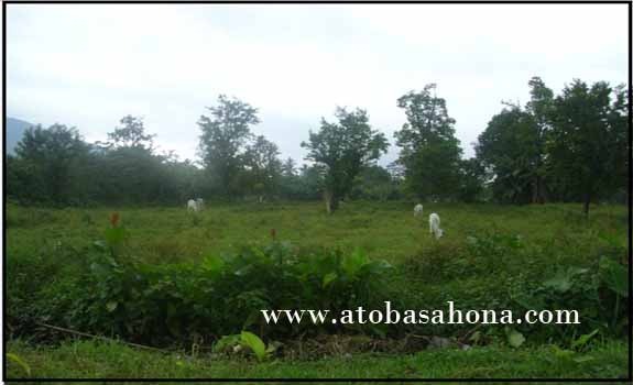 Sistem Agroforestri