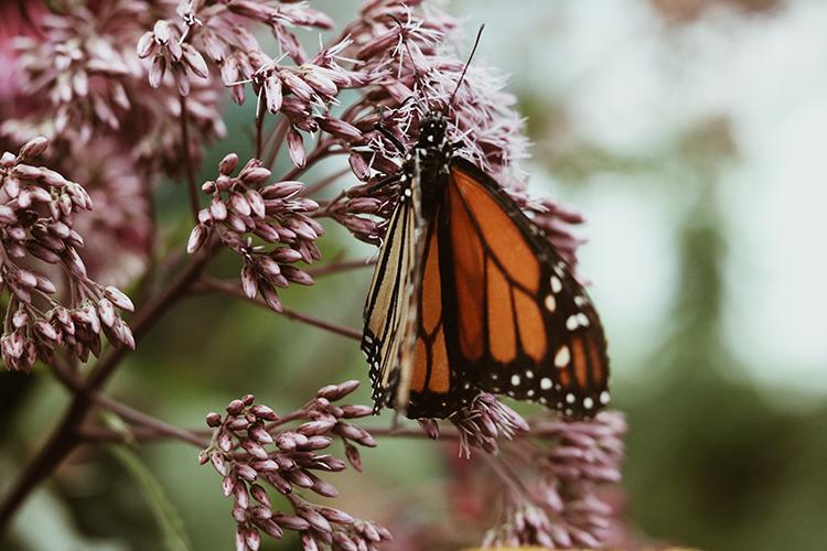 vlindertuin-utrecht
