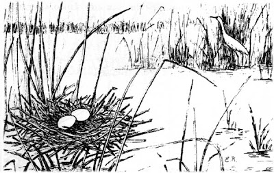 Garcita blanca Egretta thula