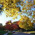 40 years of urban forests making cities healthier, safer, happier