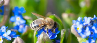 Abeja recolectando nectar