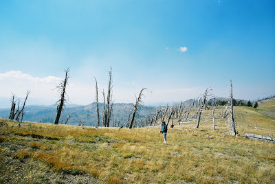 View and dead trees on Mt. Sheridan near Heart Lake, Yellowstone National Park