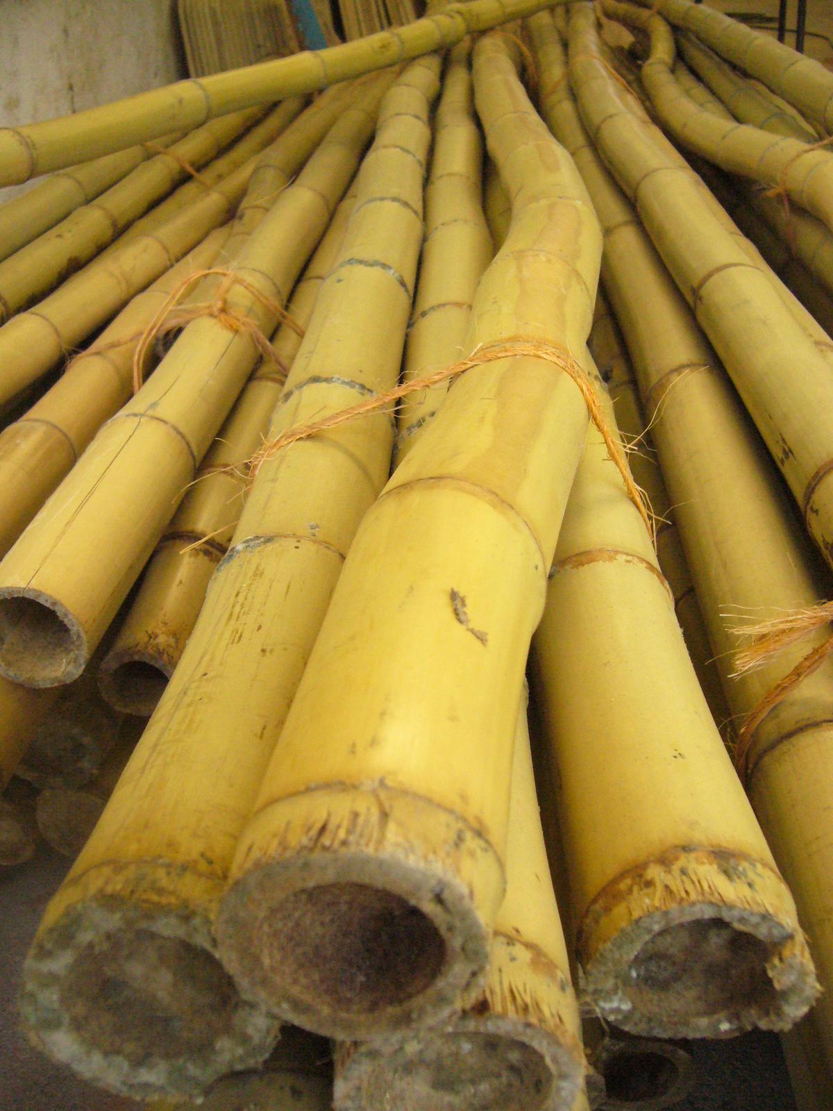 Muros Verdes Proyecto El Bambu Como Nueva Opcion Para Muros Verdes - Bambu-seco