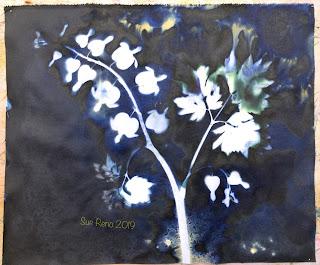 Wet cyanotype_Sue Reno_Image 598