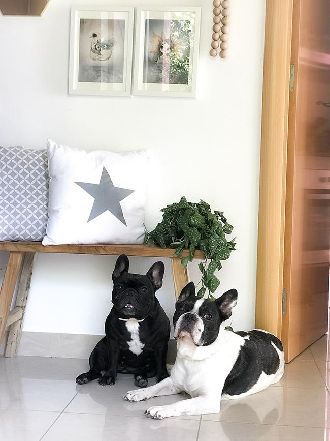 Las vacaciones de OKER y GRETA, ¿cómo cuidar a tus mascotas?