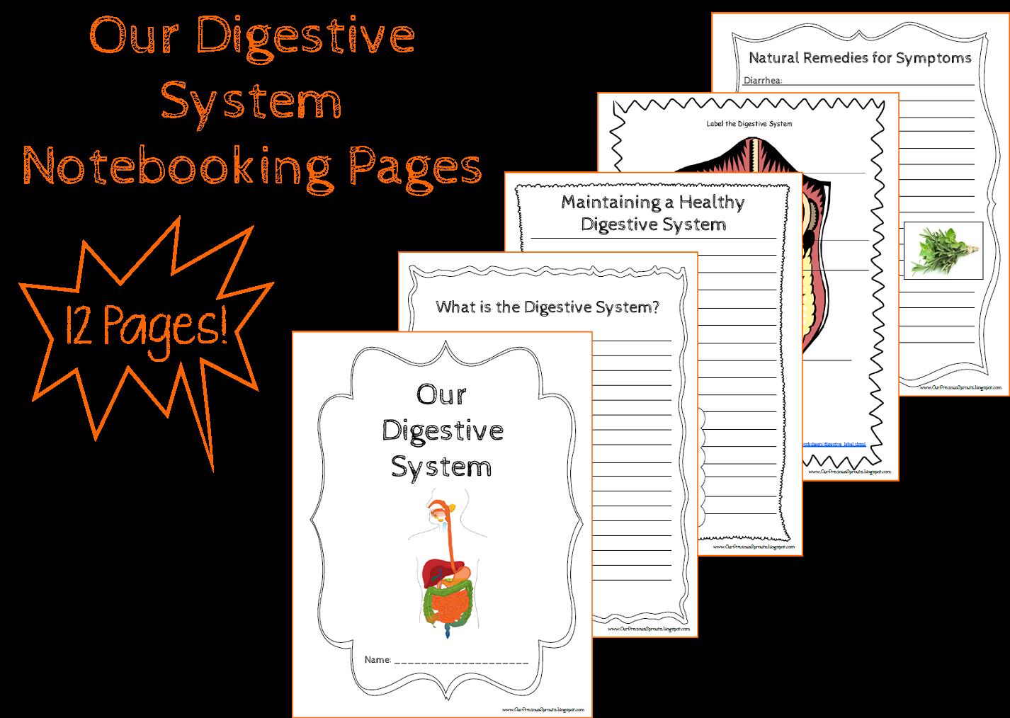 Digestive System Diagram Worksheet Parts Of A Goat