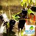 Berkebun Stroberi Hidroponik di Dataran Rendah, Bagaimana Caranya?