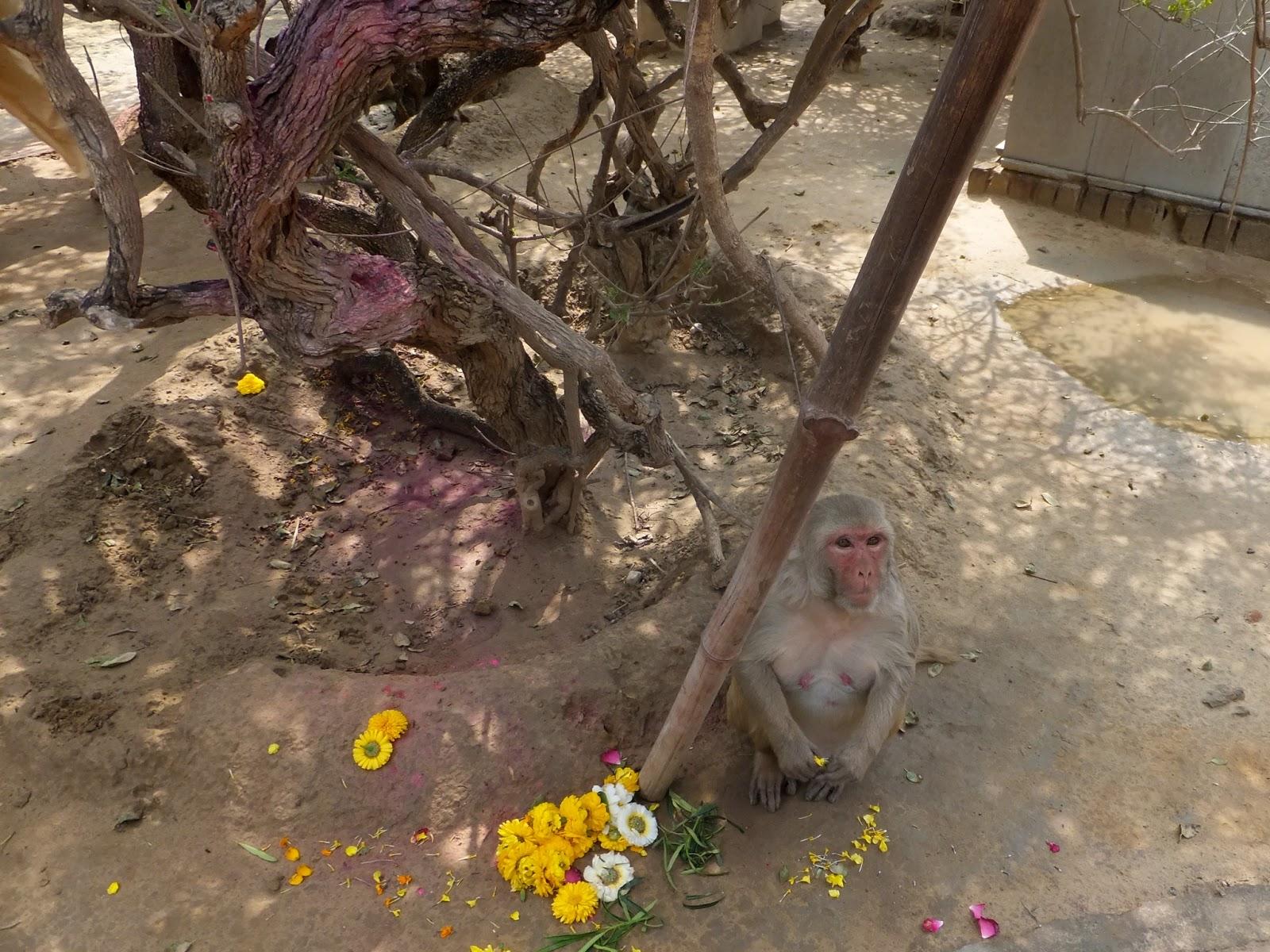 обезьяна в храме