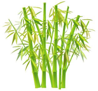 El bambú japonés y el proceso de crecimiento interno