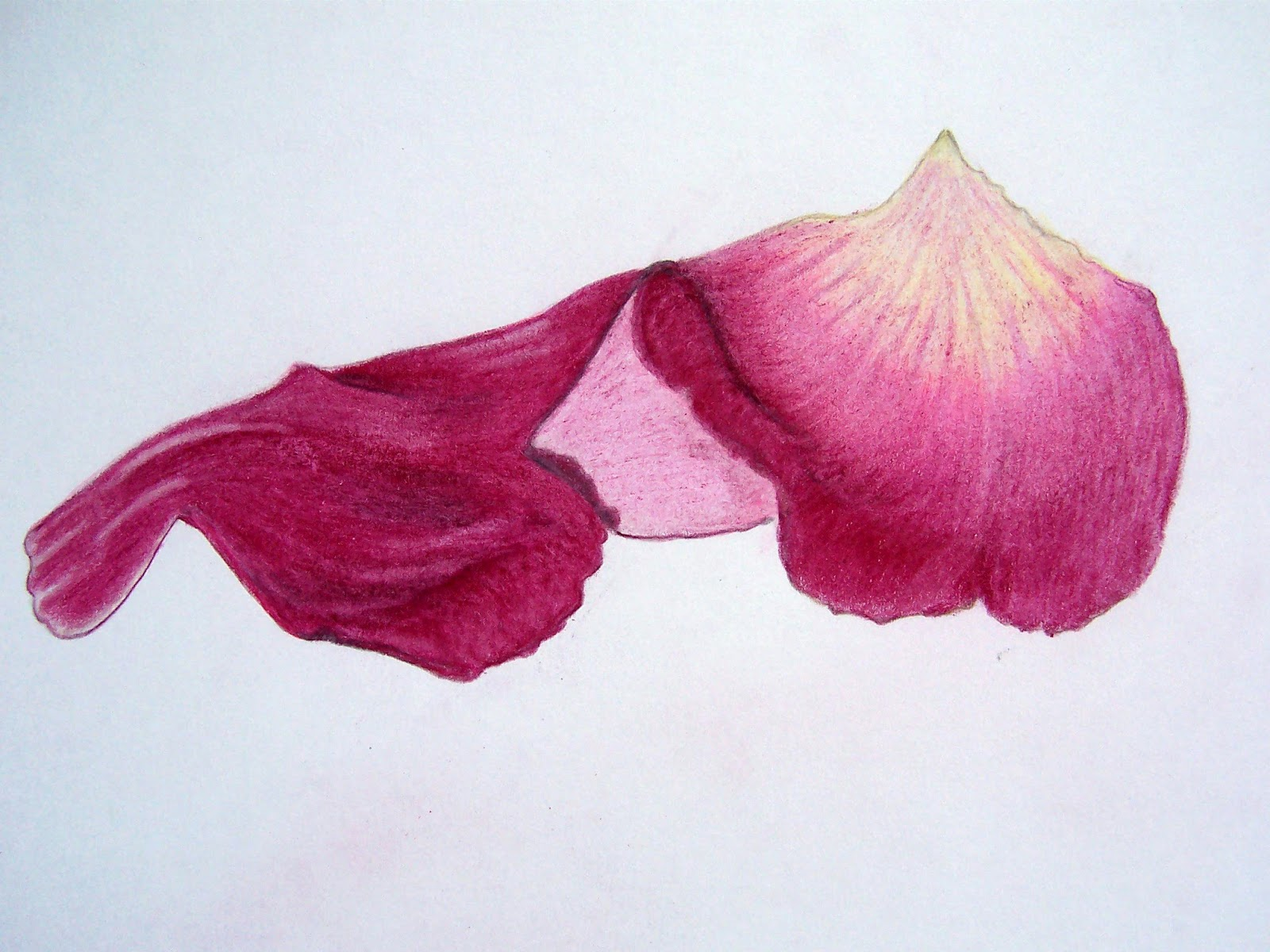 This is a photo of Transformative Rose Petal Drawing