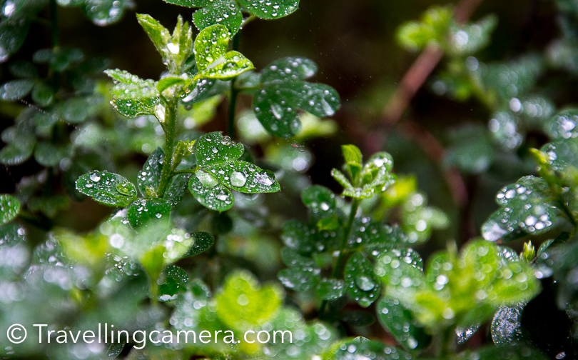 Since it was raining, my travellingcamera wanted to capture these shiny drops on the colourful leaves. And I missed a macro lens during the walk.
