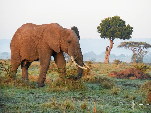 słoń, safari, Afryka