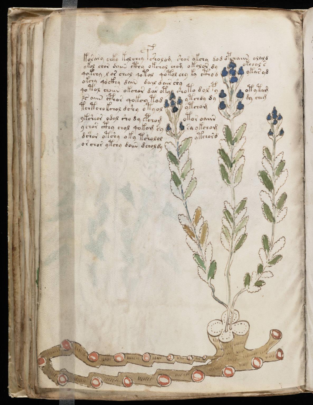 manuscrito088